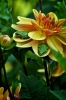DSC_0947 guest photo of frogs